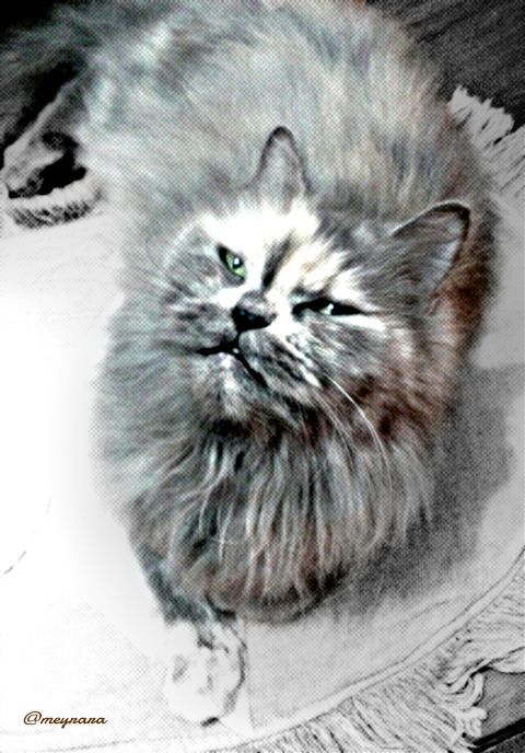 pets & animals photography old photo black & white cat