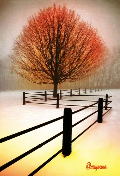 nature bokeh photography winter