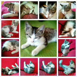 colorful collage pets & animals cute cat