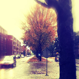 streetsnap rain tree autumn
