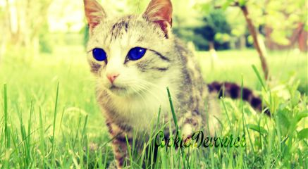 summer nature photography pets & animals vintage cute