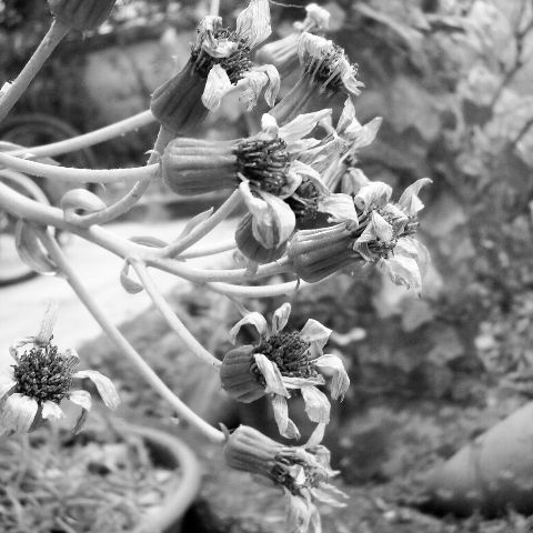 black & white flower emotions love photography