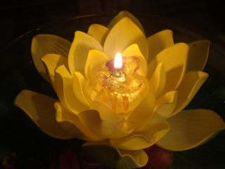 candle lotus peace