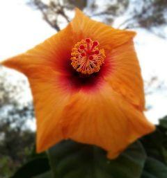 flower orange red nature october