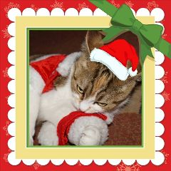 pets & animals cute cat collage christmas