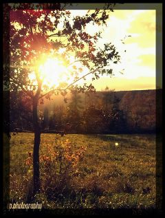 nature lights sun autumn photography