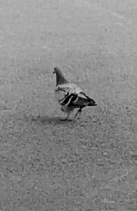 quotes & sayings photography nature bird black & white
