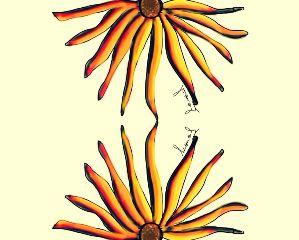 spring dcflower popart nature flower