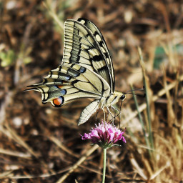love nature photography beautiful flower butterfly