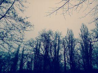 black & white nature photography winter