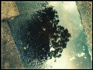 photography reflection nature